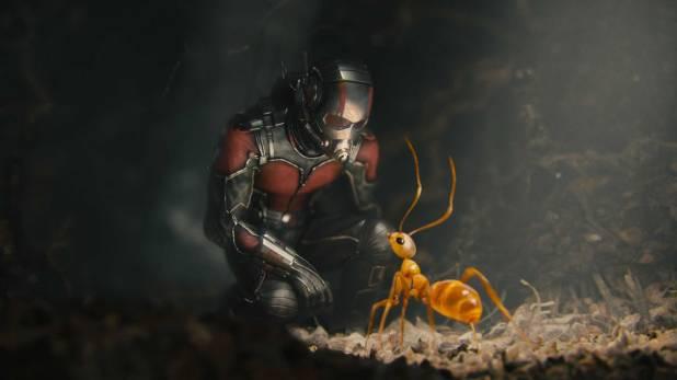Homem-Formiga e uma formiga-louca ♥